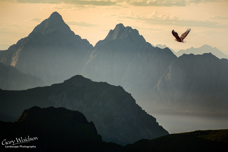 White tailed eagle over the peaks of Lofoten. Fine Art Landscape Photography by Gary Waidson