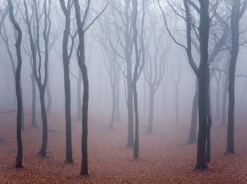 Tandlewood in the mist.